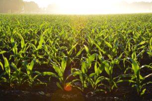 L'open innovation, nouvel Eldorado du secteur agroalimentaire ?