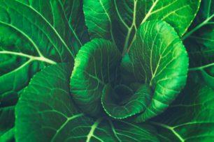 Végétalisation de l'alimentation : mais que veulent donc les consommateurs ?