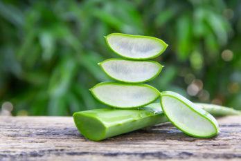 L'Aloe Vera : des textures à valoriser dans vos innovations