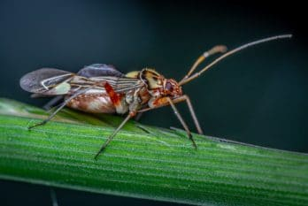 Les poudres d'insectes : limites d'utilisation et fonctionnalités culinaires